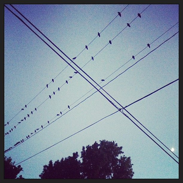 Birds are seriously taking over Orange. #apocalypse #thebirds #hitchcock #creepy #nightbirds #wereallgonnadie