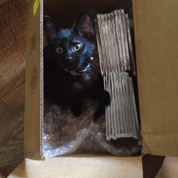 Mailing some #wellhungheart CDs to the Netherlands… and an extra special surprise. #cocanut #coca #kittensarefun