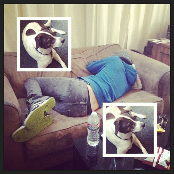 DAY 7 - @therobindavey is #MonkeyShouldered! Lissa the Studio Dog @secretninjastudios is judging you! #lightweight #getittogether #itsguitarday #suckitupsucka (at Secret Ninja Recording Studios)