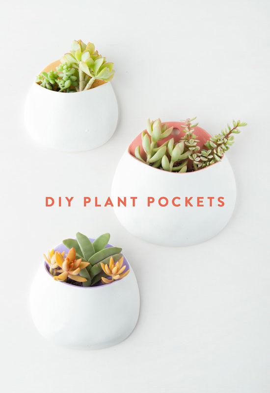 plant01 (1).jpg