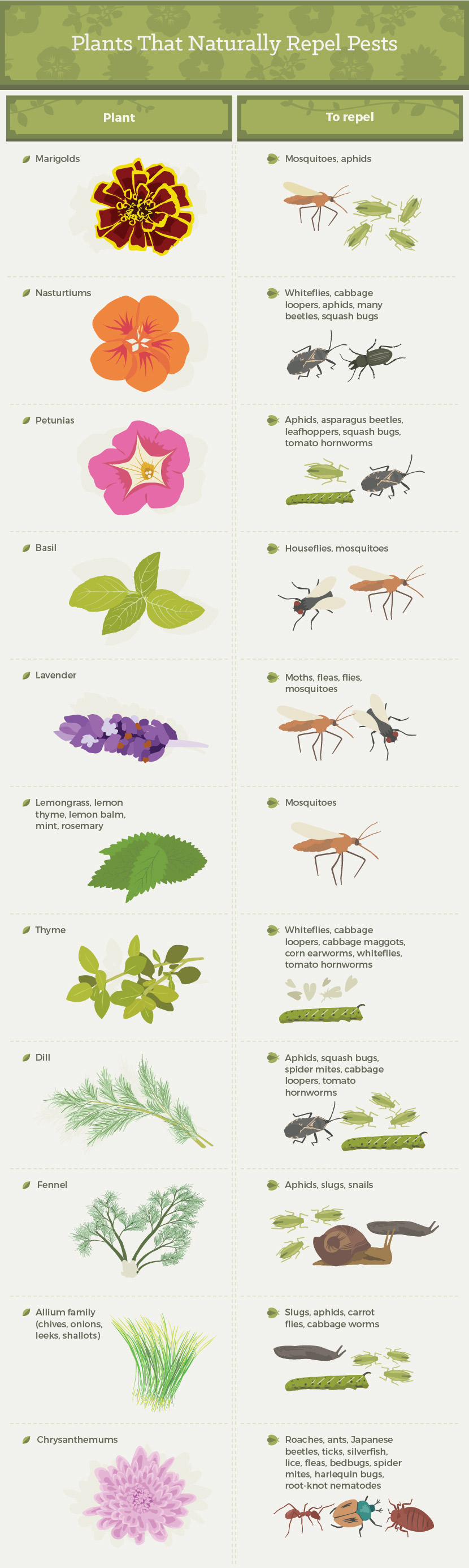 plants-that-naturally-repel-pests-003.jpg