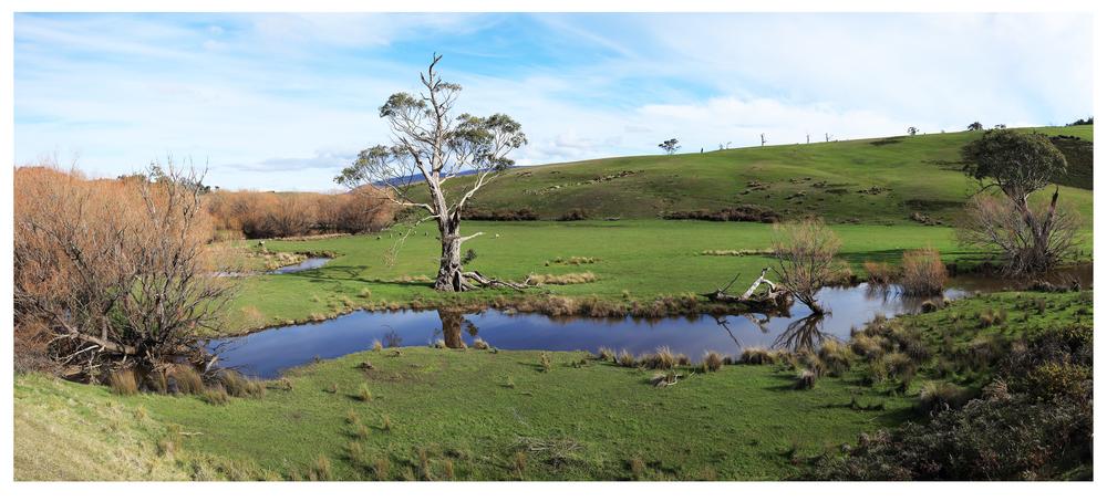 treek creek2.jpg