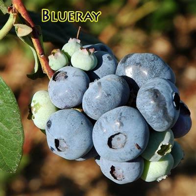 blueray2.jpg
