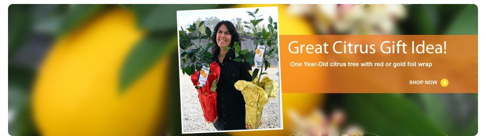 banner_citrus_gift_idea_1