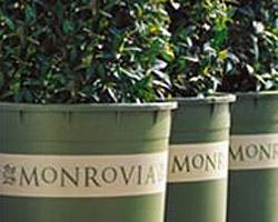 monrovia-pots