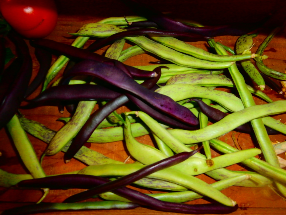 Purple and Rattlesnake beans.
