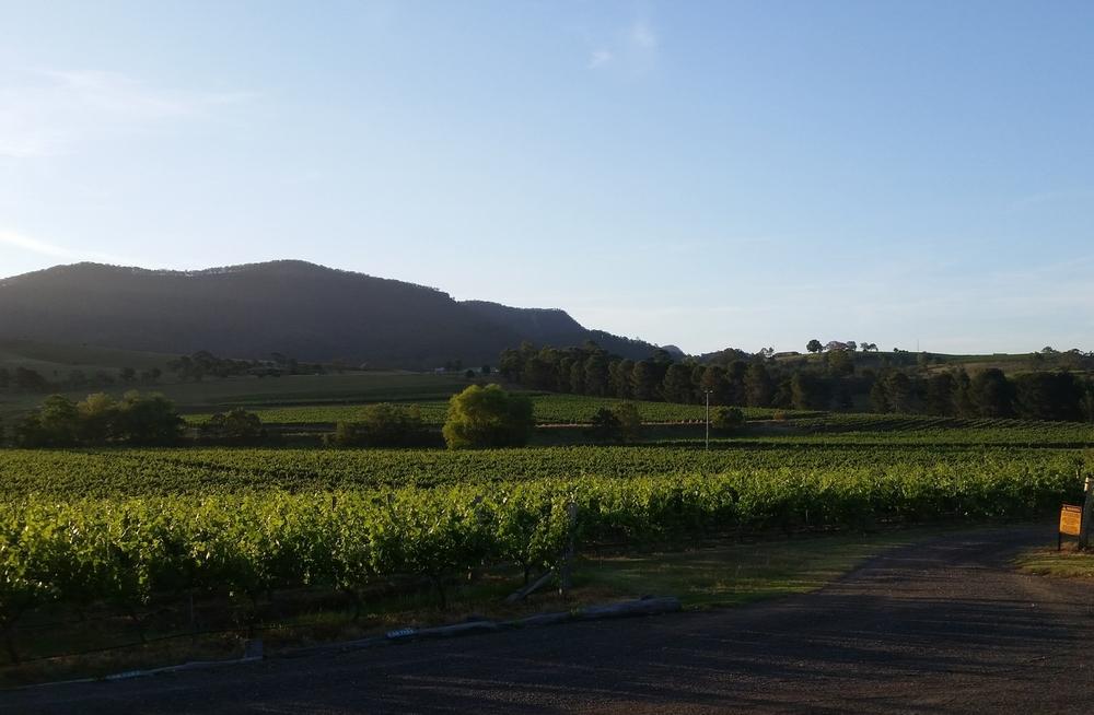 Pokolbin Vineyards - Hunter Valley