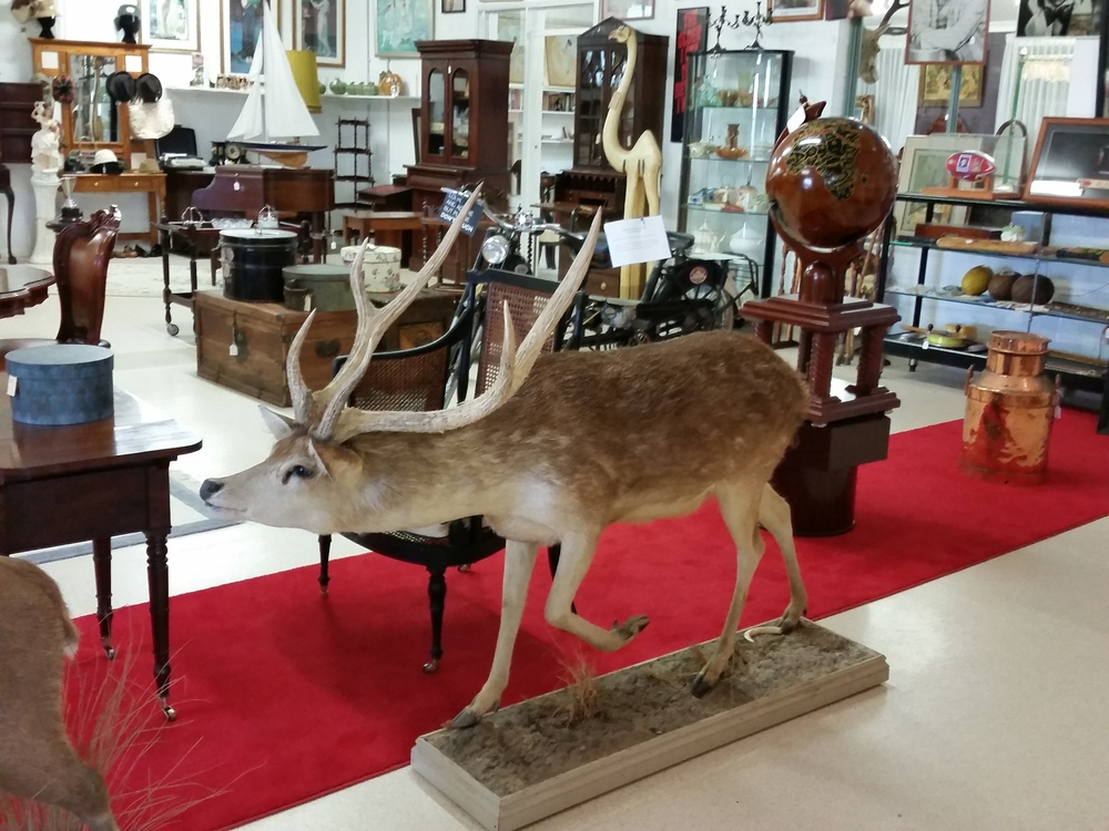 Antique Hunting in Pokolbin, Hunter Valley