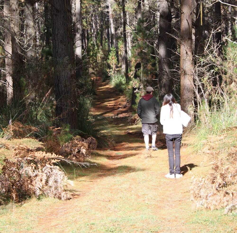 forest-ppl.jpg