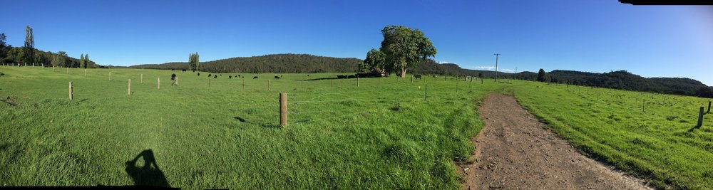 The green fields of deep, rich alluvial soils.