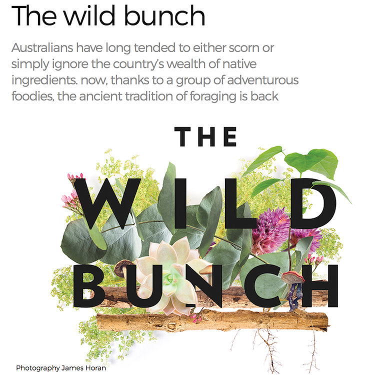 - The Wild Bunch, American Way Magazine, March 2017