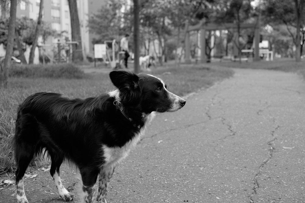 Un amigo mas en las calles