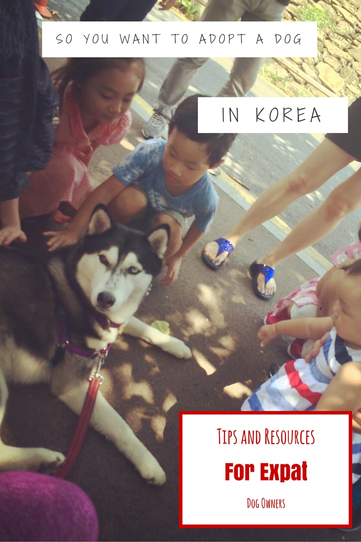 Tips and Resources for Expat Dog Owners