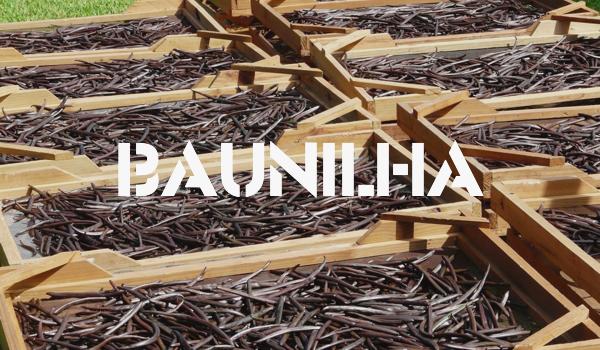 BAUNILHA.jpg