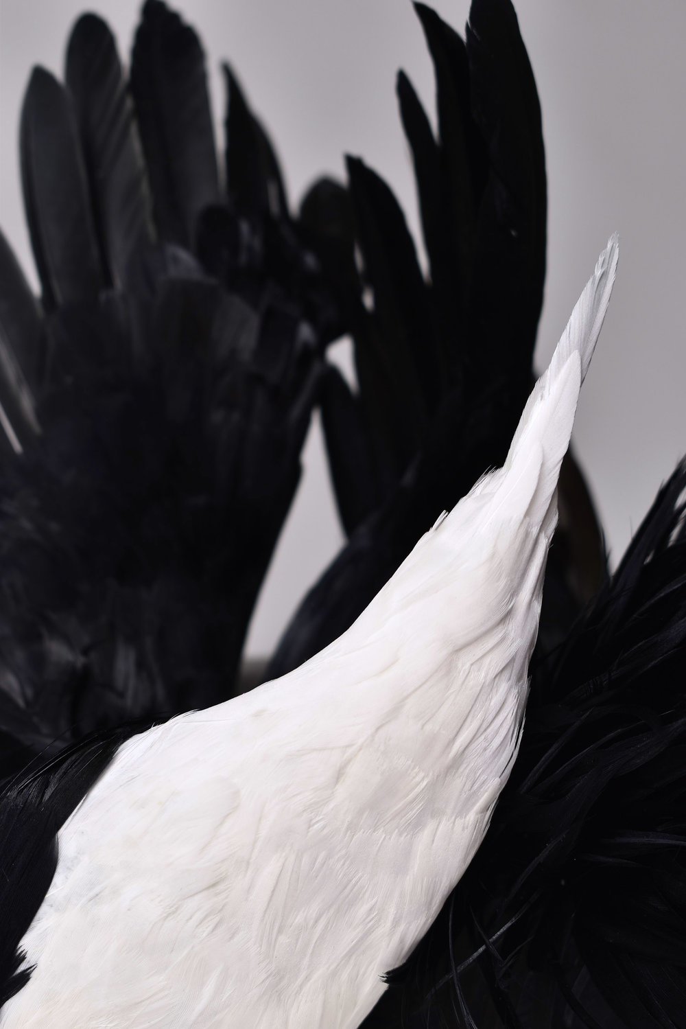 feather-1.jpg
