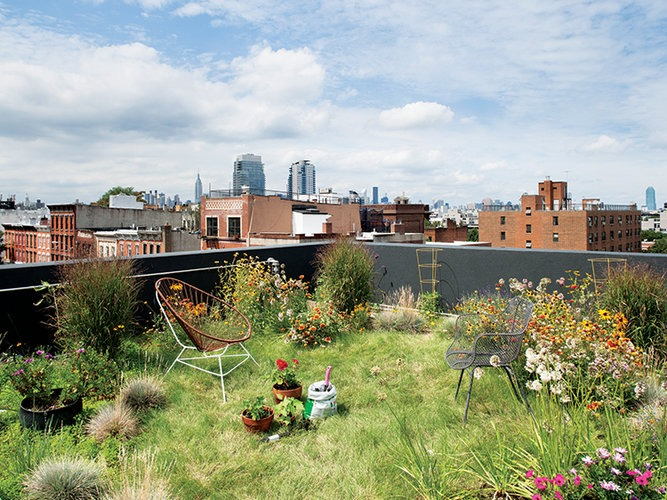 bambali :     174 GRAND, BROOKLYN NEW YORK      The green roof has approximately eight inches of soil and absorbs rainwater runoff. (via   Peek Inside 8 Of The World's Greenest Homes  )        #greenroof