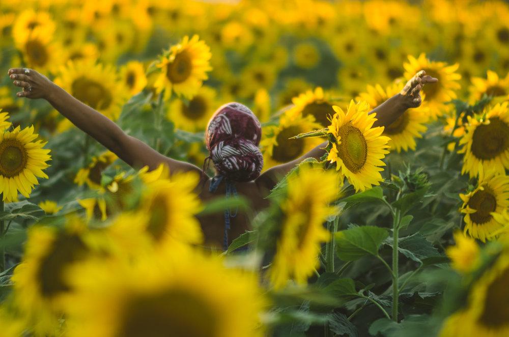 Sunflower-76.jpg