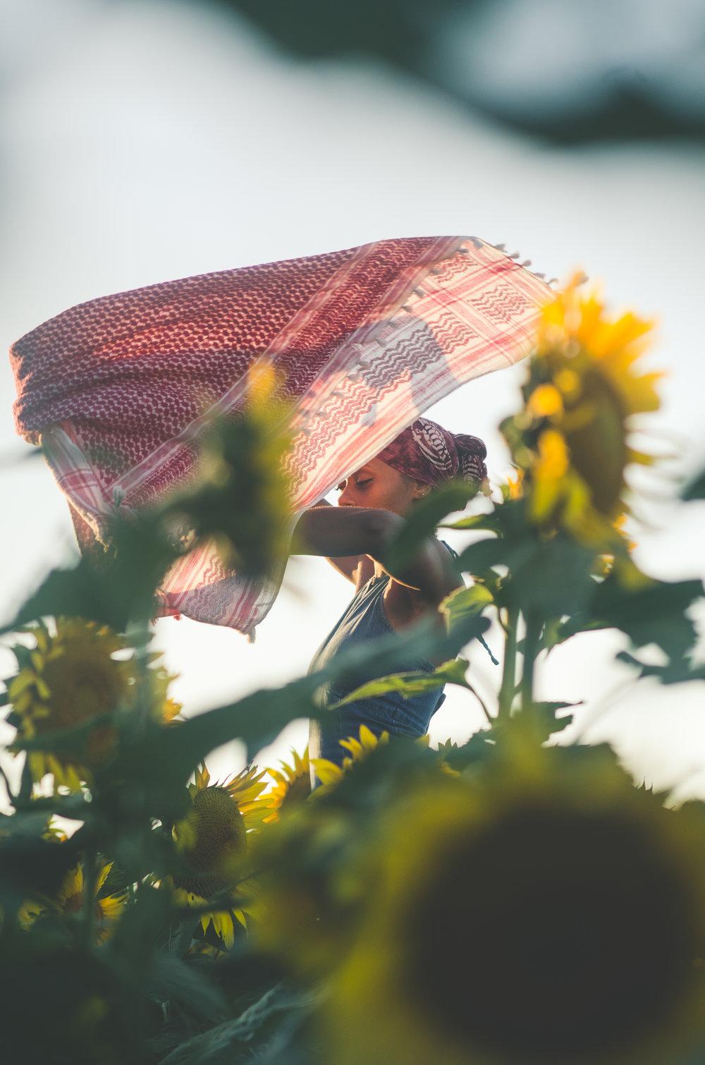 Sunflower-70.jpg