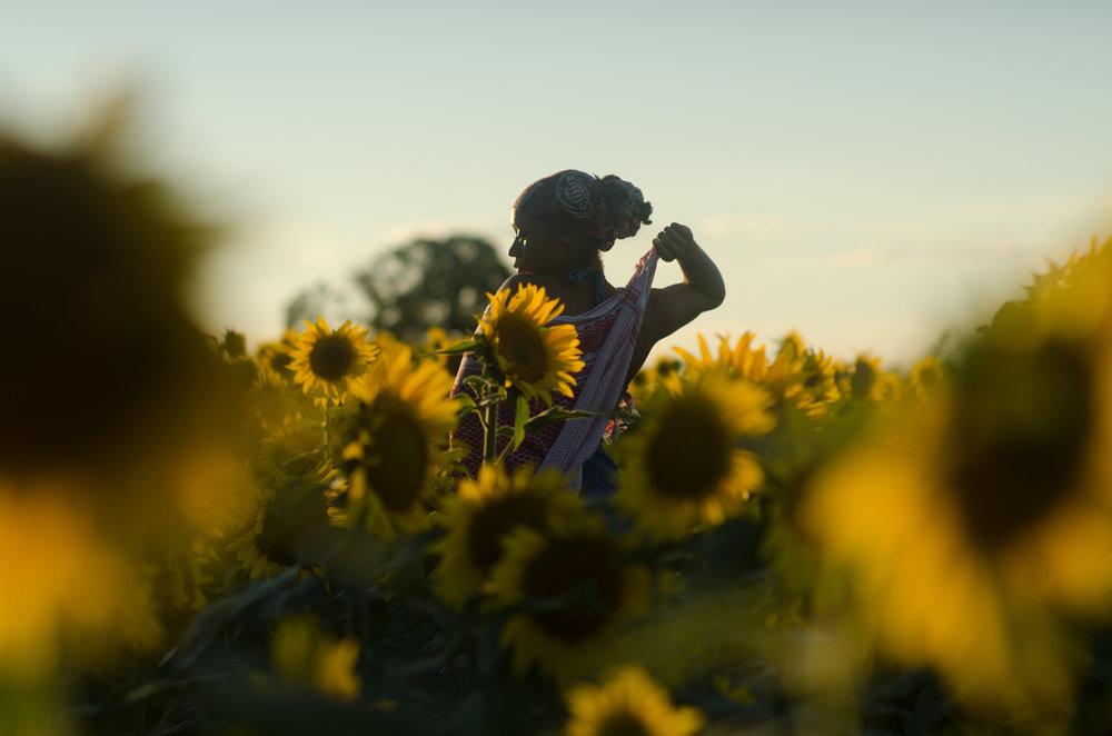 Sunflower-66.jpg