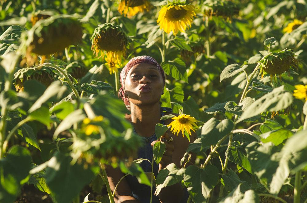 Sunflower-7.jpg