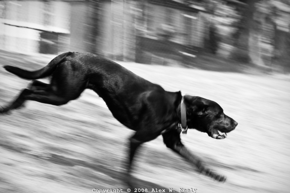 dog running.PNG