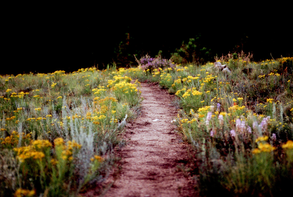 """Wildflowers on the Colorado Trail"", 2001"