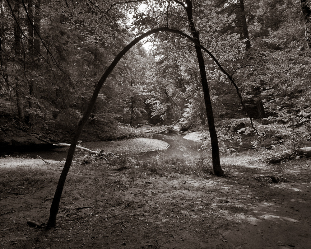 """Bending Tree"", Hocking Hills State Park, OH, 2013"