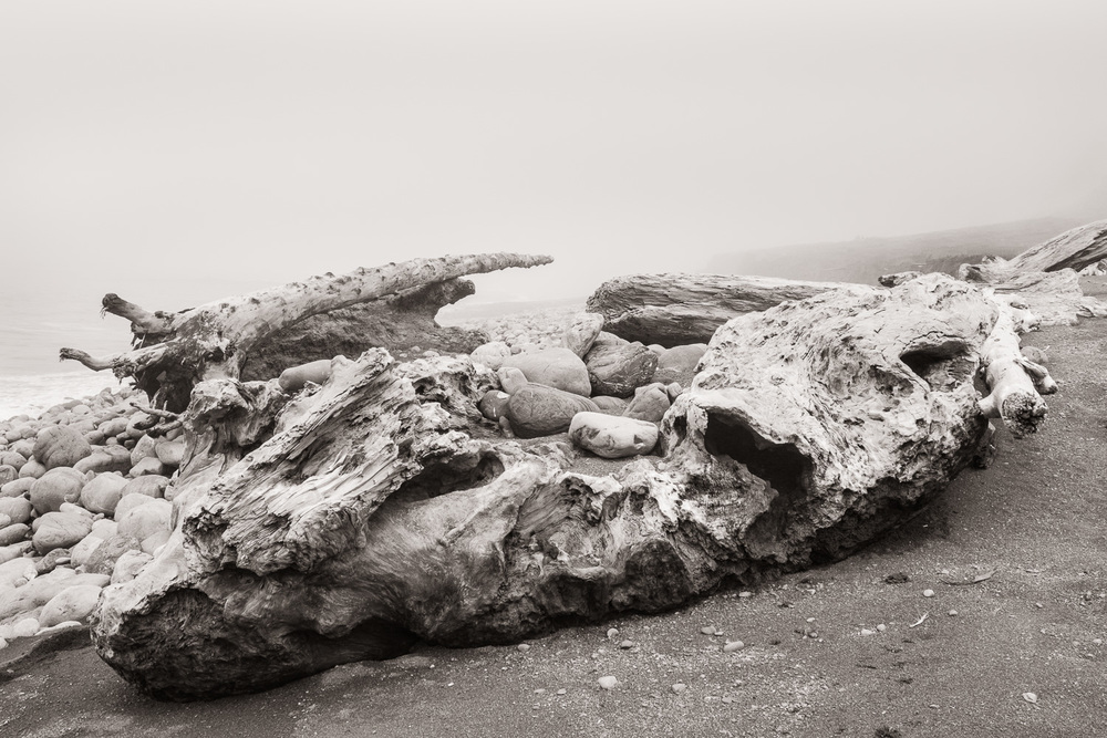 """Driftwood"", The Lost Coast, CA, 2014"