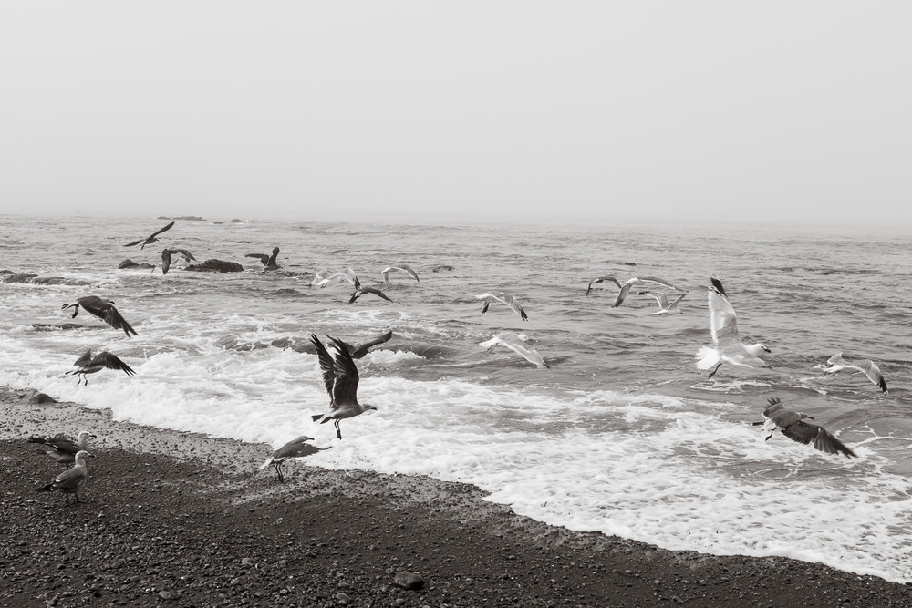 """Gulls"" The Lost Coast, CA, 2014"