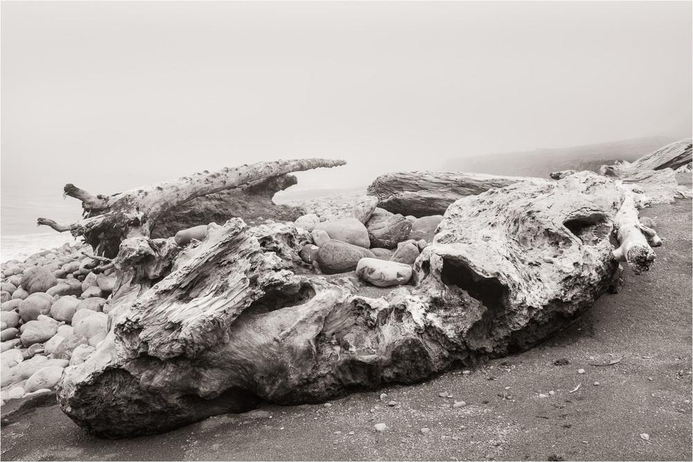20140729_Giant-Driftwood_Lost-Coast.jpg