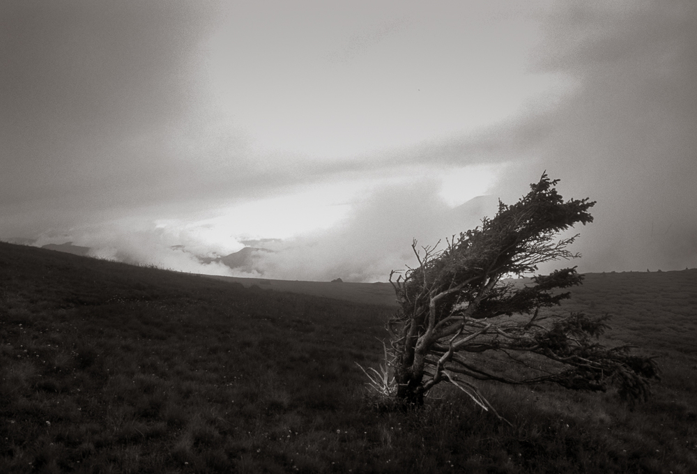 """Windswept Tree"", The Colorado Trail, 2001"