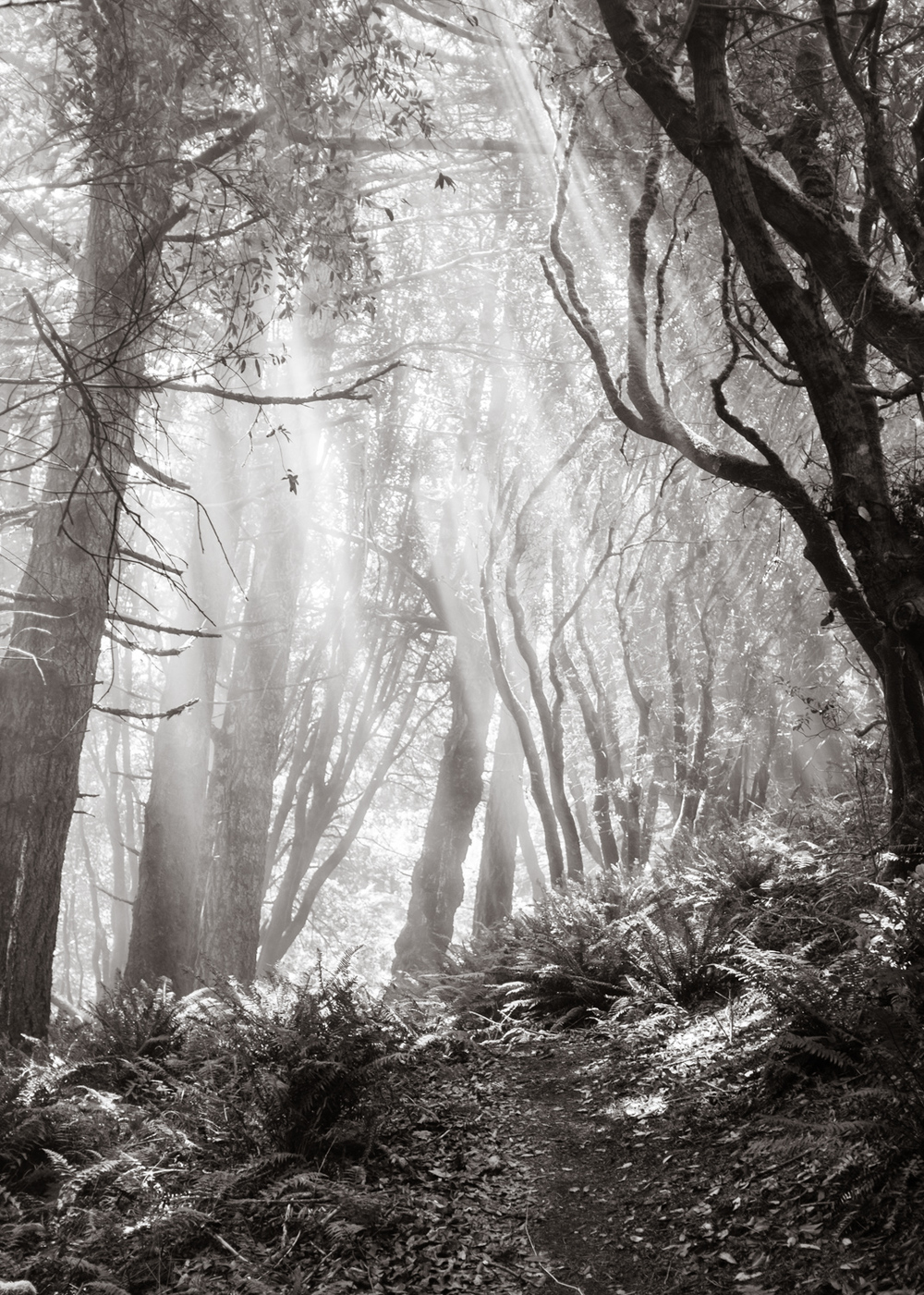 """Morning Fog"", The Lost Coast, CA, 2013"