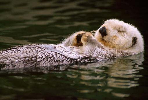 Otter.JPG