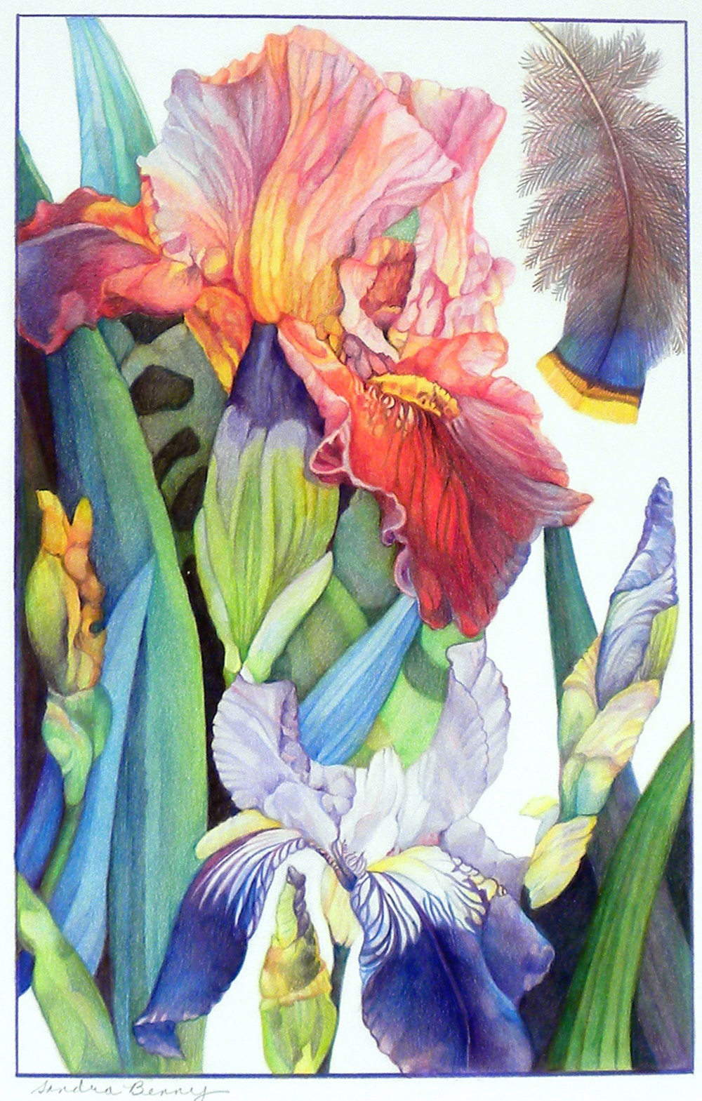 Red-Orange Iris 17 x 11 in. color pencil .jpg