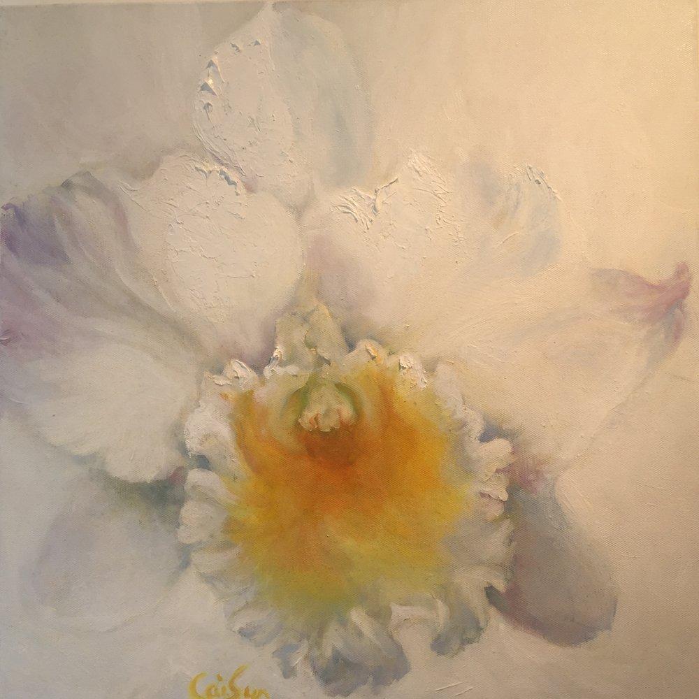 Sun Daffodil