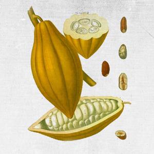 PAESE DI ORIGINE: ECUADOR BENEFICI: Idratante, curativo, anti rughe BALSAMO RIGENERANTE BALSAMO ESFOLIANTE