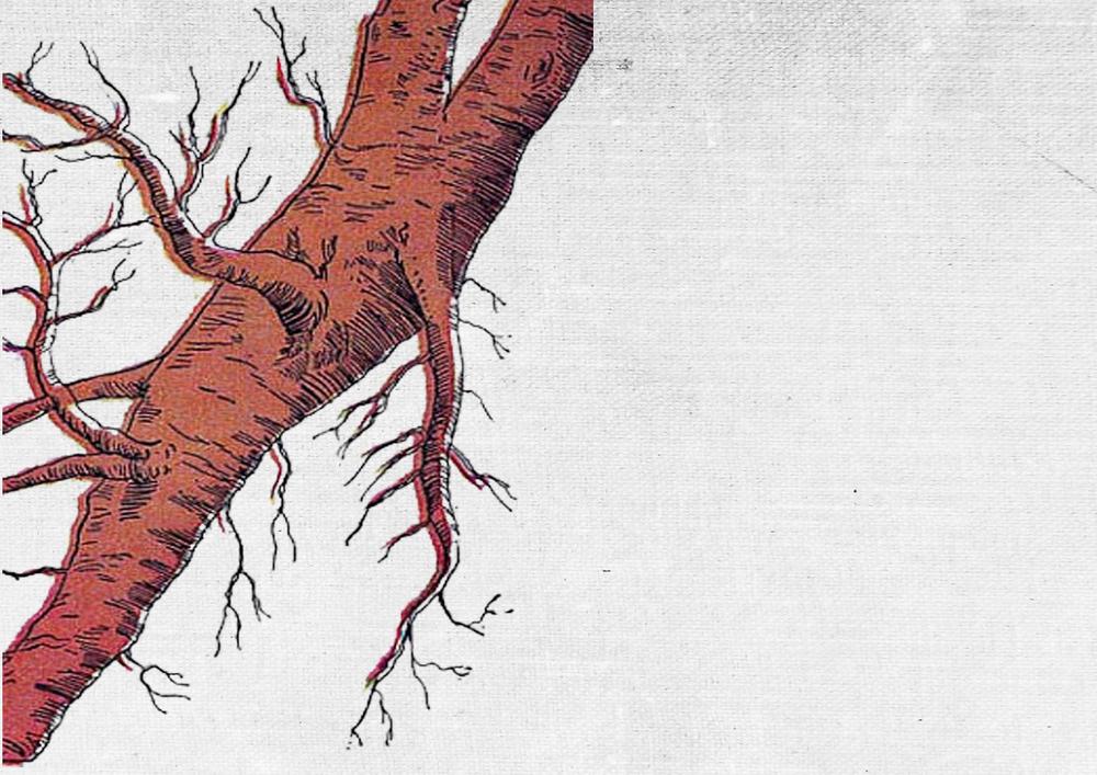 PAESE DI ORIGINE: SRI LANKA BENEFICI:disintossicante, effetto bilanciane, calmante ed idratante BALSAMO VISO ANTI OSSIDANTE
