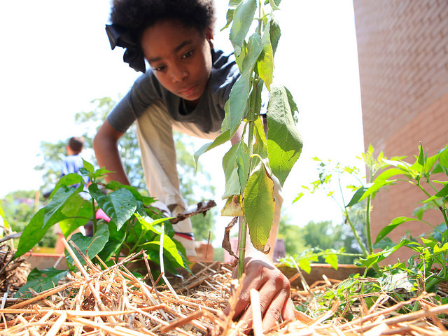 Learn more about how our community and educational gardens are increasing community vitality in their neighborhoods.