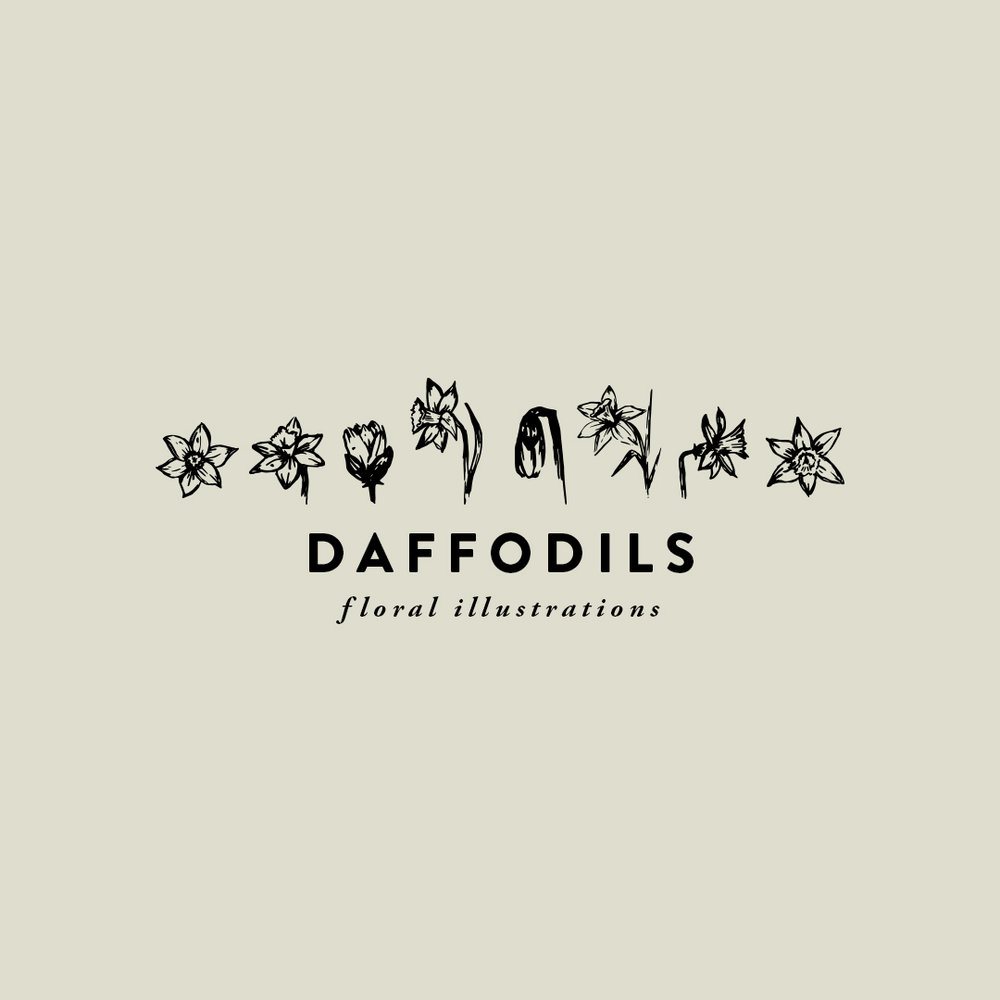 DAFFODILS hand-illustrated florals $8.00