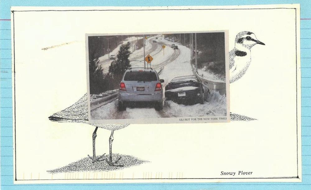110 snowy plover.jpg