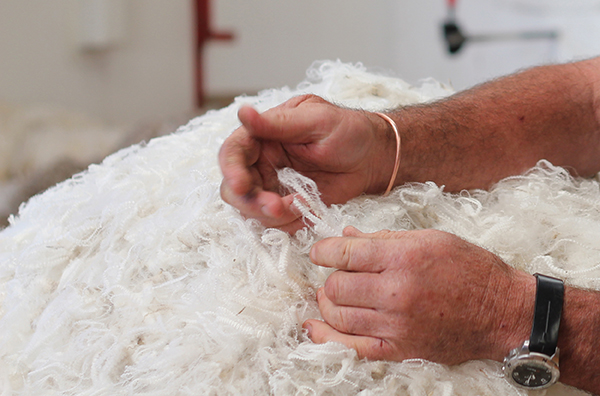 Merino Fibre in hands.jpg