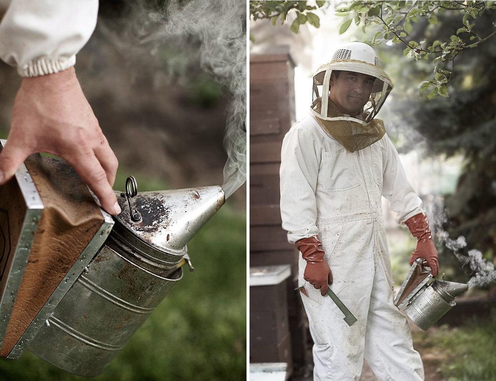 HoneyBee2up.jpg