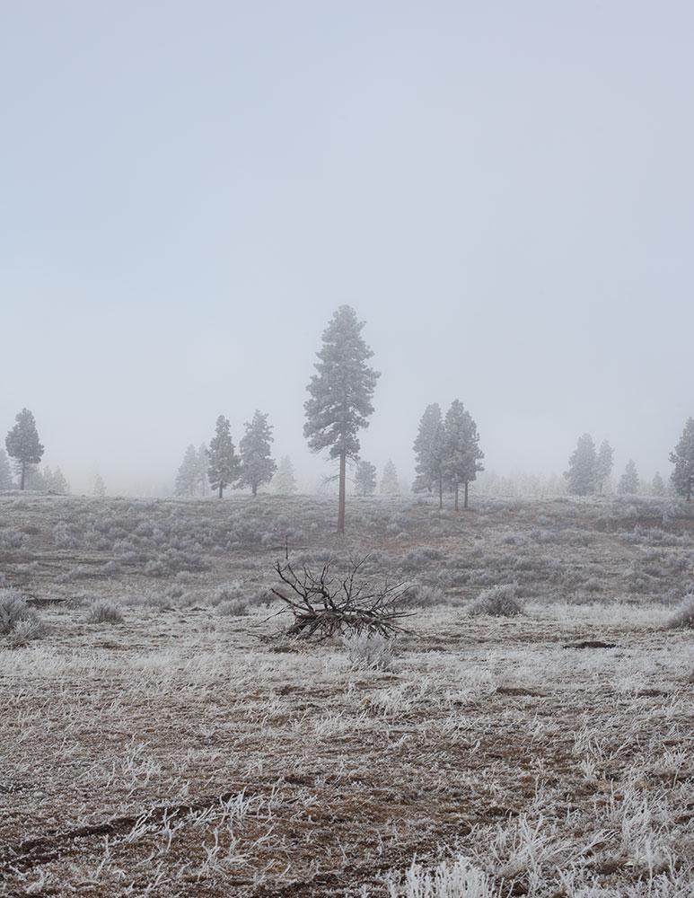 PatrickKehoe_FreezingFogv2