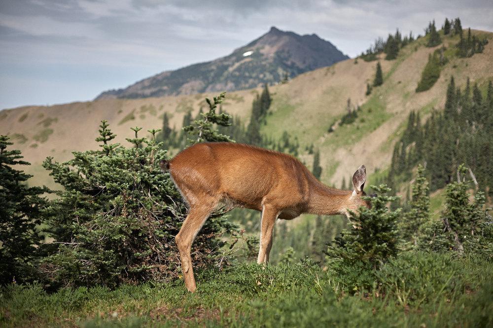 Kehoe_Deer_MG_8007.jpg