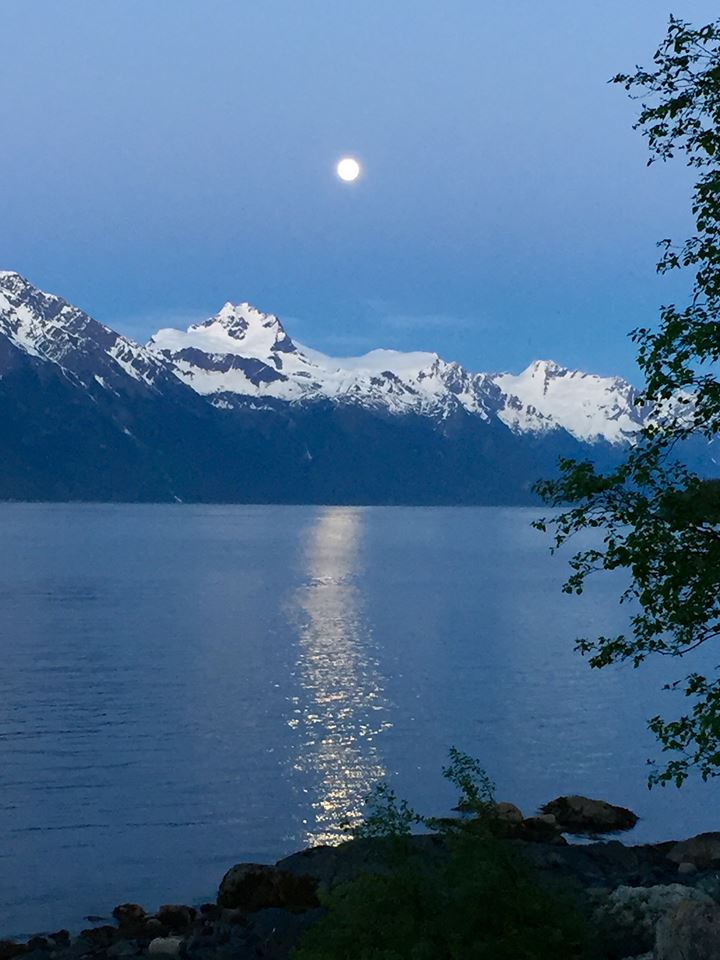 Moonlight on the Fjord at Viking Cove.jpg