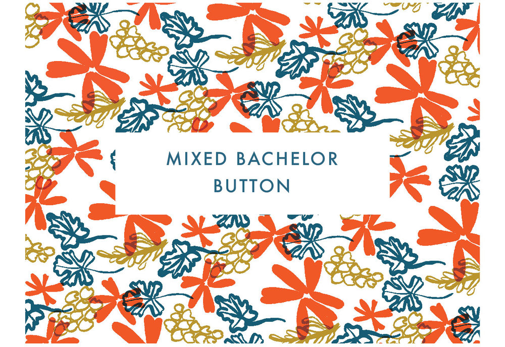 Mixed Bachelor Button
