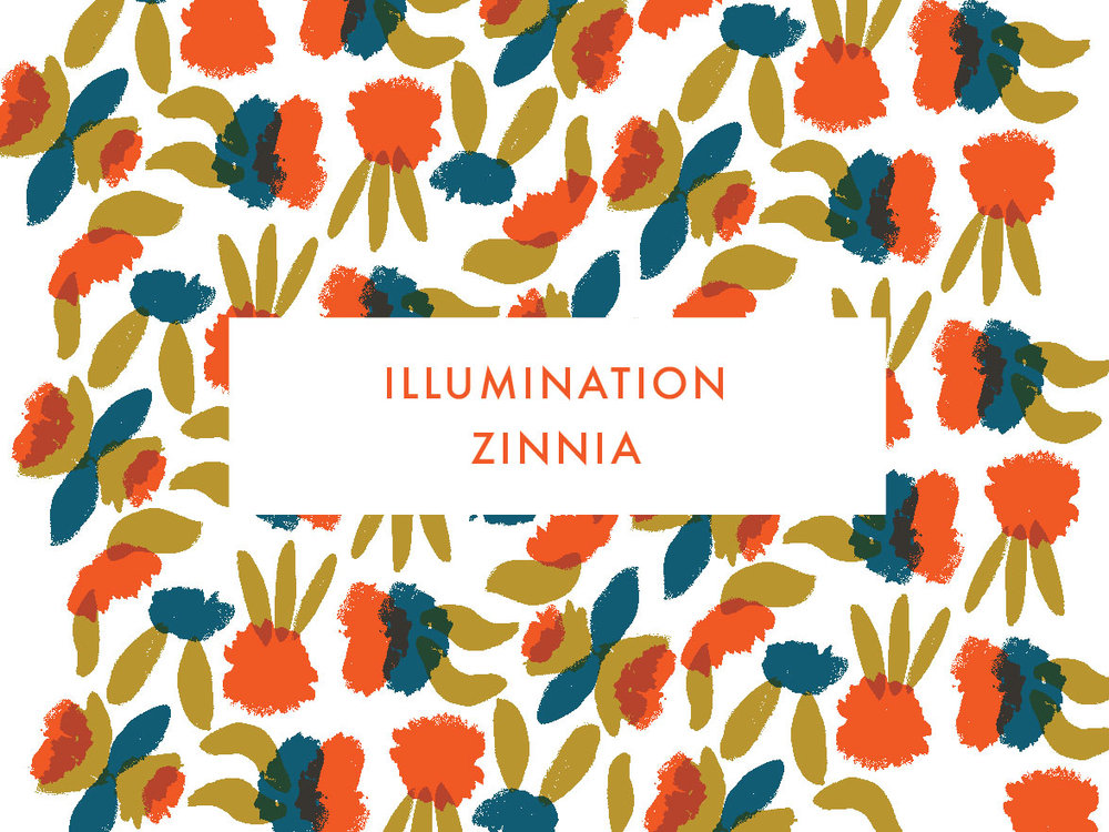 Illumination Zinnia