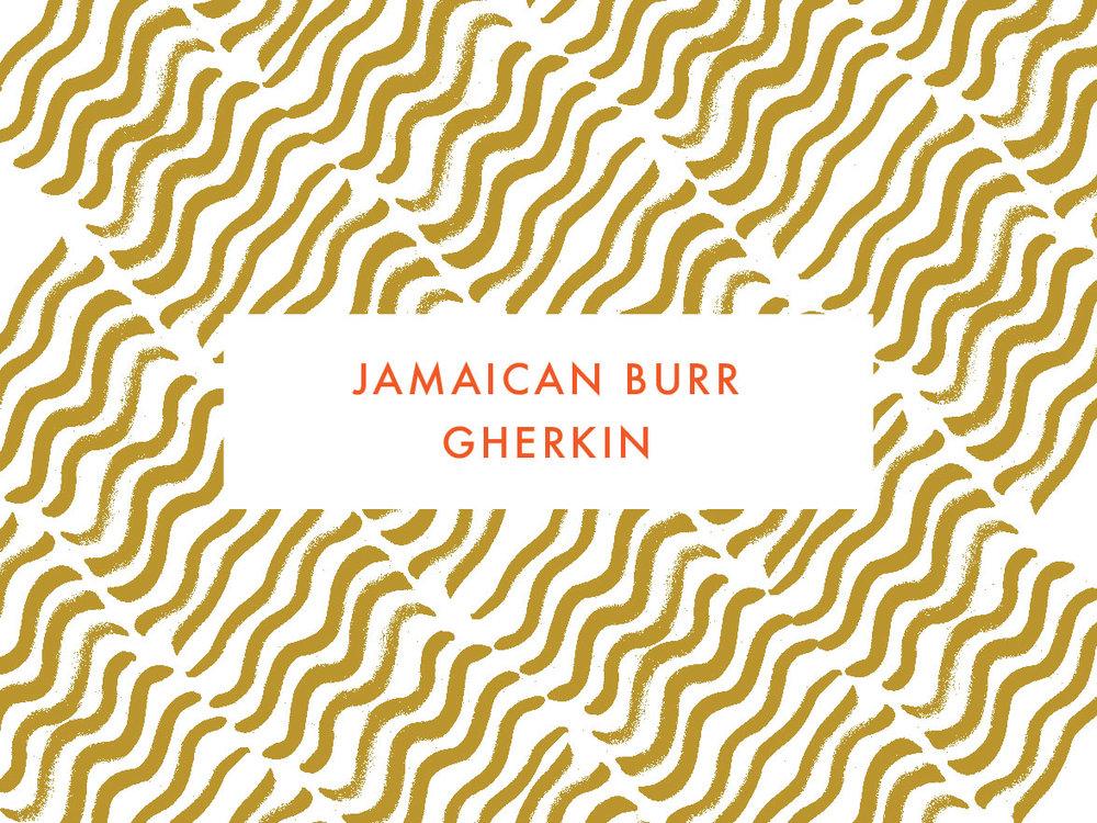 Jamaican Burr