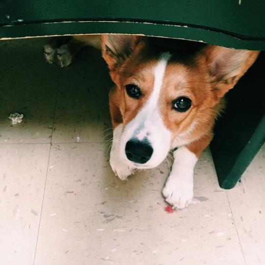 Maybie hiding at the vet.
