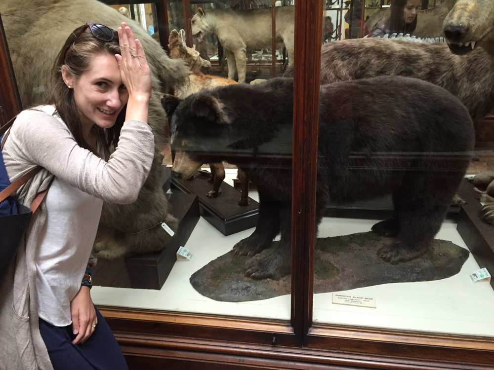 Fins up I found an Ole Miss black bear in the a Natural History Museum